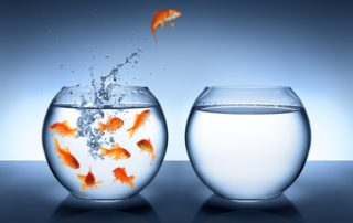 goldfish jumping from bowl full of other fish to bowl with no other fish - self-sufficiency